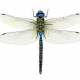 Dragonfly87's picture